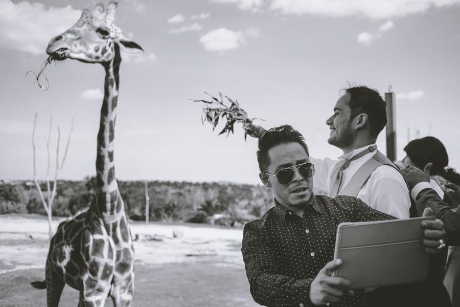 boda en africam safari  en africam safari - martha-carlos-jorge-pastrana-51